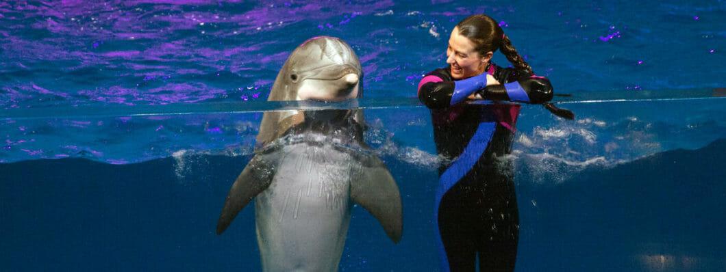 Common Bottlenose Dolphin 1