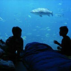 Dolphin Encounter 1