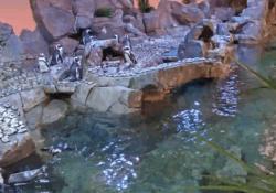 African Penguin Webcam