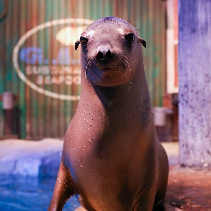 2019 Sea Lion Encounter