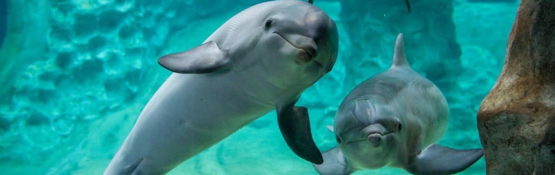 Dolphin Coast 1