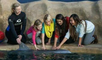 Dolphin Encounter 2