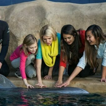 Dolphin Encounter 2