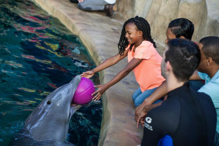 Dolphin Encounter 7