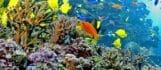 Indo-Pacific Barrier Reef Webcam 1