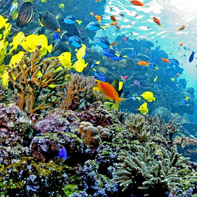 The Georgia Aquarium - live cameras of exhibits to watch from home
