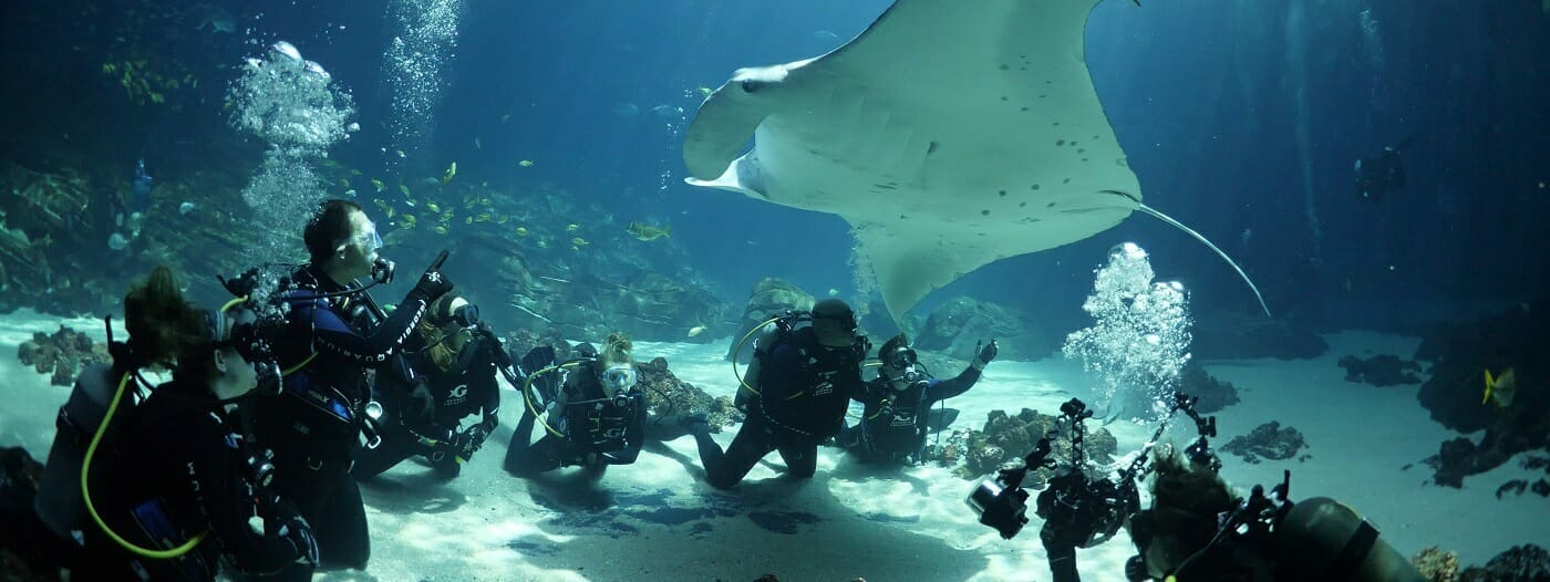 dive with gentle giants encounter  u0026 experience