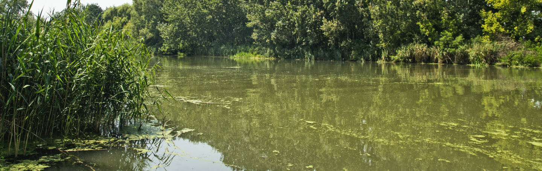 georgia-aqaurium-slow-moving-river