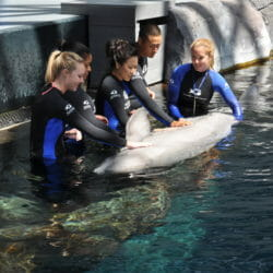 Beluga Interaction 3