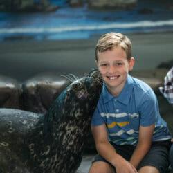 Seal Encounter 5