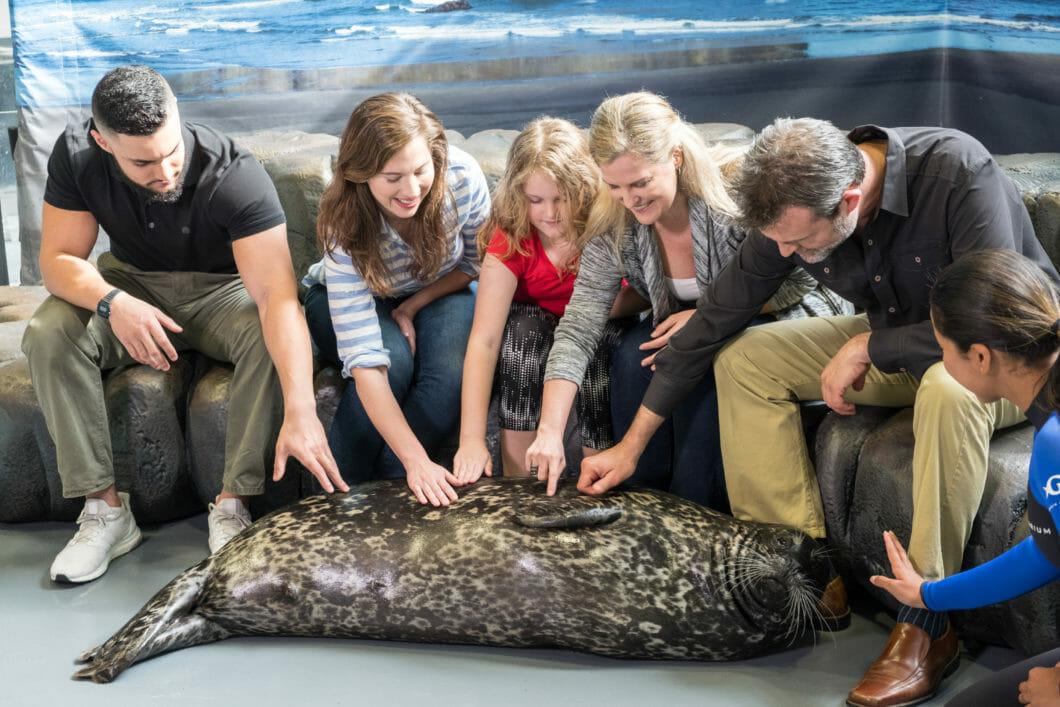 Seal Encounter 6