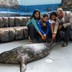 Seal Encounter 4