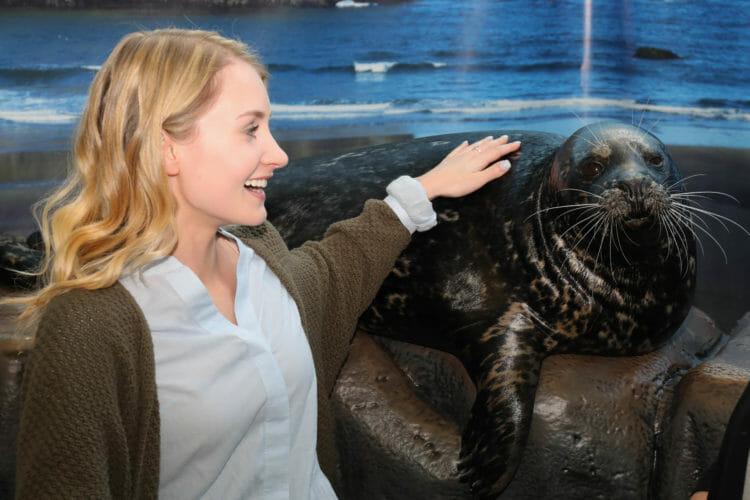 Seal Encounter 3