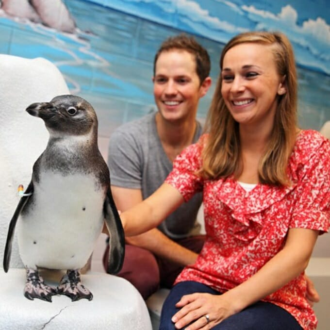 2020 Penguin Encounter