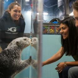 Sea Otter Encounter 14