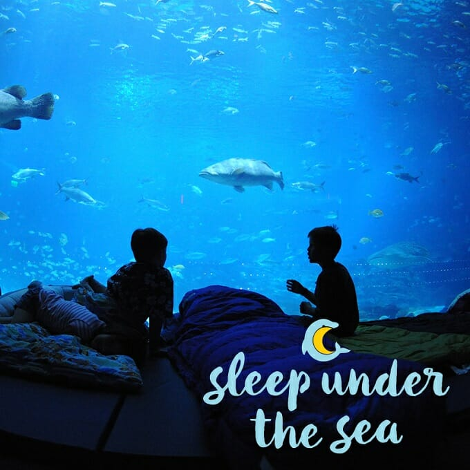 Sleep Under the Sea - Scouts
