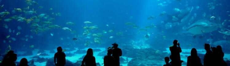 Sleep Under the Sea 3