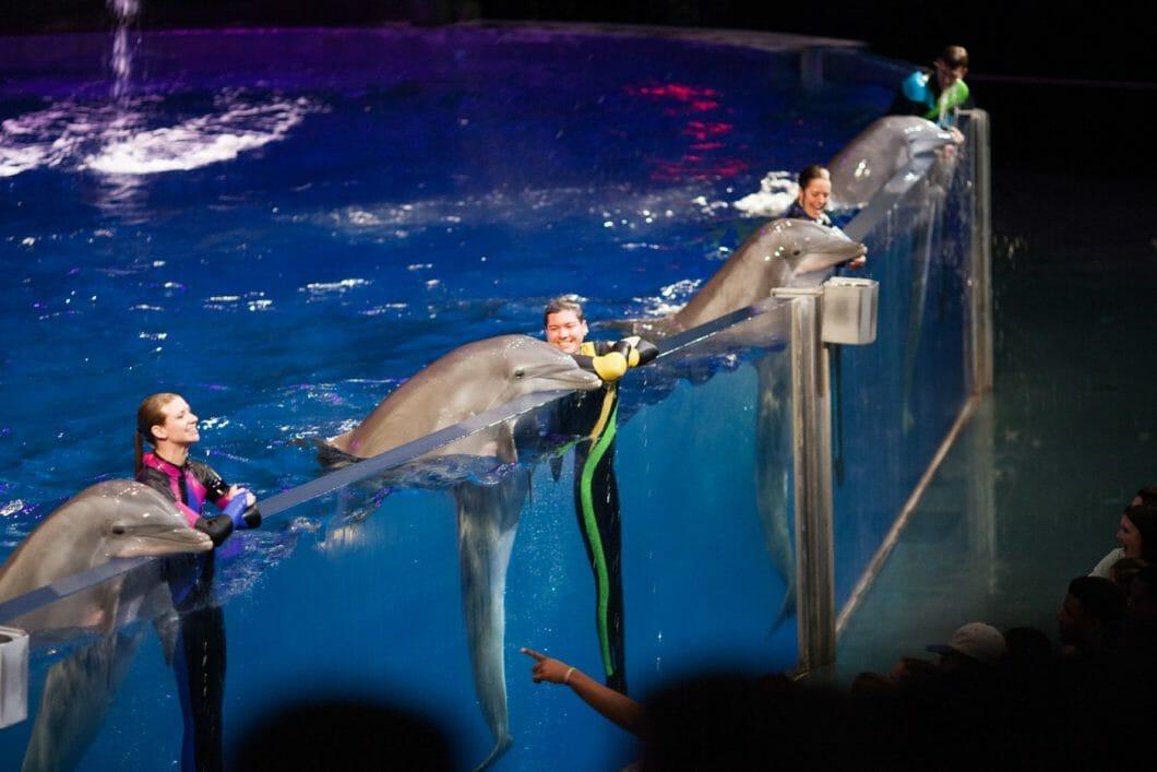 Dolphin Celebration 1