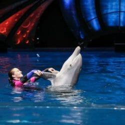 Dolphin Celebration 2
