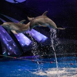 Dolphin Celebration 3