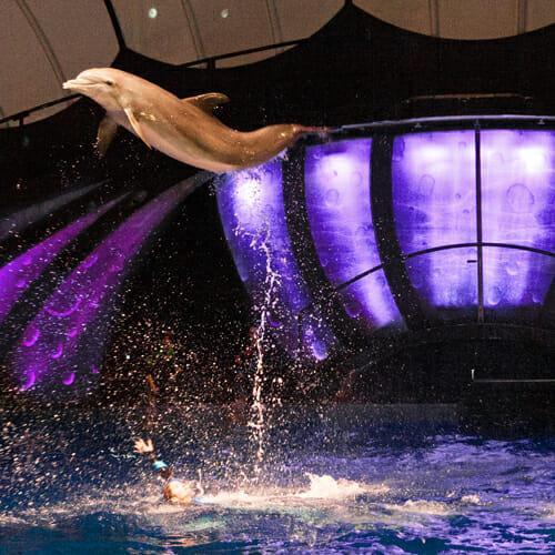 Dolphin Presentation Georgia Aquarium