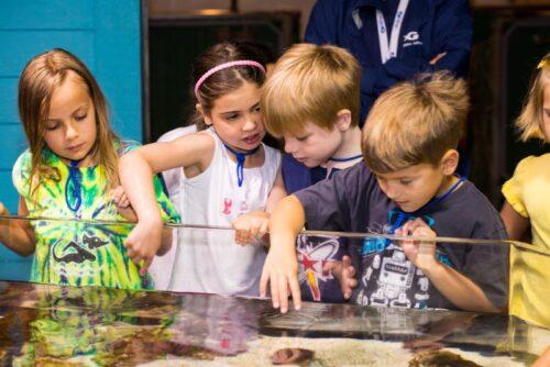 Georgia Aquarium Field Trips