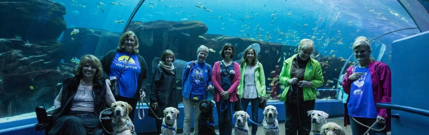 Nothing Sweeter than Service Pups in Training at the Aquarium