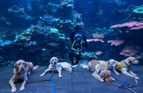 Nothing Sweeter than Service Pups in Training at the Aquarium 1
