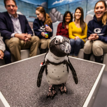 Penguin Encounter 5