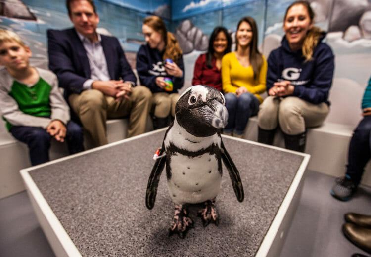 Penguin Encounter 6
