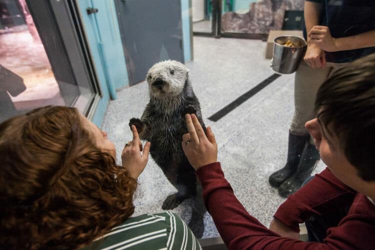 Sea Otter Encounter 11