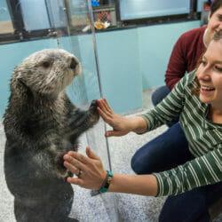 Sea Otter Encounter 12