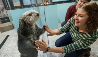 Sea Otter Encounter 13