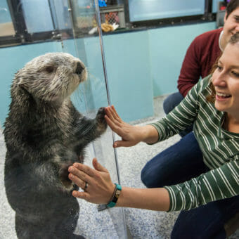 Sea Otter Encounter 13