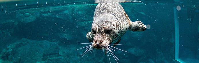 Seal Encounter 12