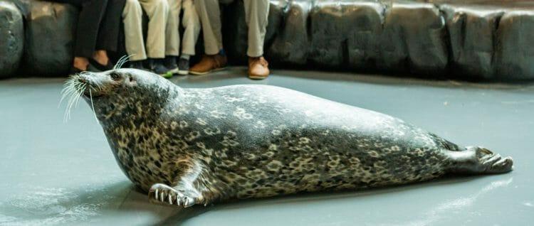 Seal Encounter 15