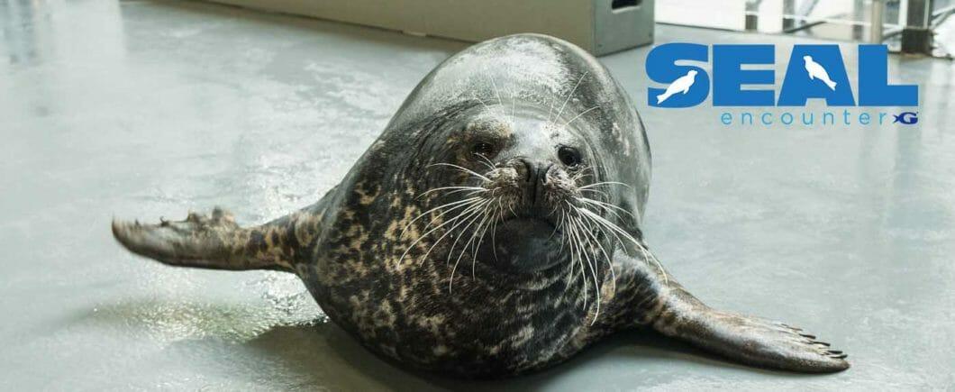 Seal Encounter 1