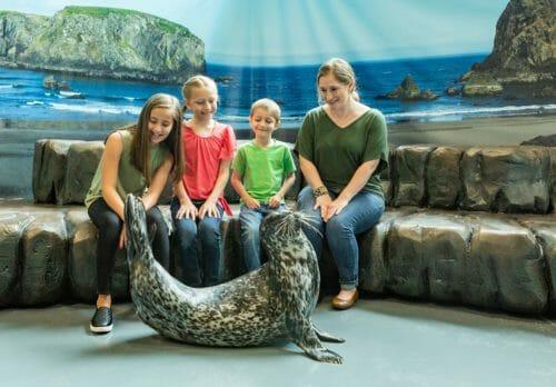 Seal Encounter 11