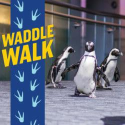 Waddle Walk