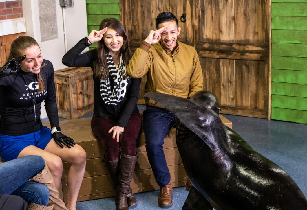 Sea Lion Encounter 4