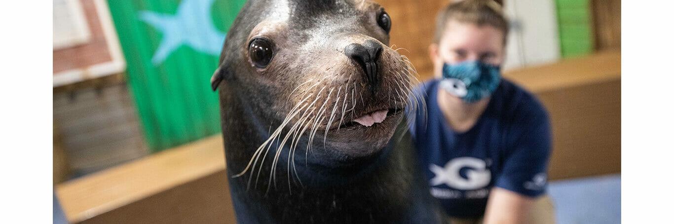 Sea Lion Encounter 17