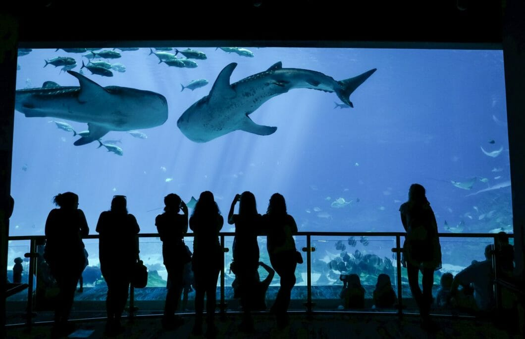 Georgia Aquarium Named Top Aquarium in the US by TripAdvisor
