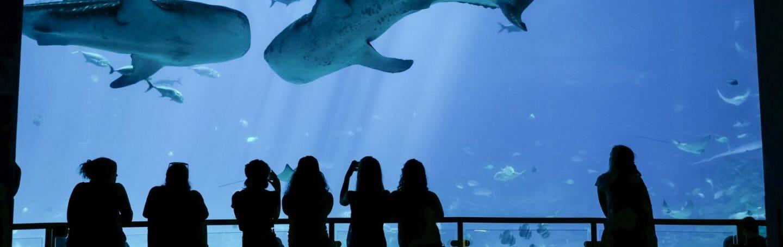 Georgia Aquarium Named Top Aquarium in the US by TripAdvisor
