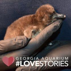 Georgia Aquarium Premieres New Facebook Watch Series: Aquarium Love Stories 1