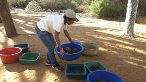 Turtle Survival Alliance Launches Rescue Mission to Nearly 11,000 Critically Endangered Radiated Tortoises Discovered in Massive Poaching Bust 1