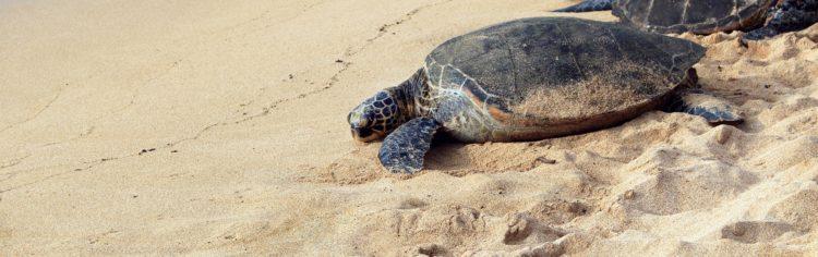 Turtle Trot 5K 19