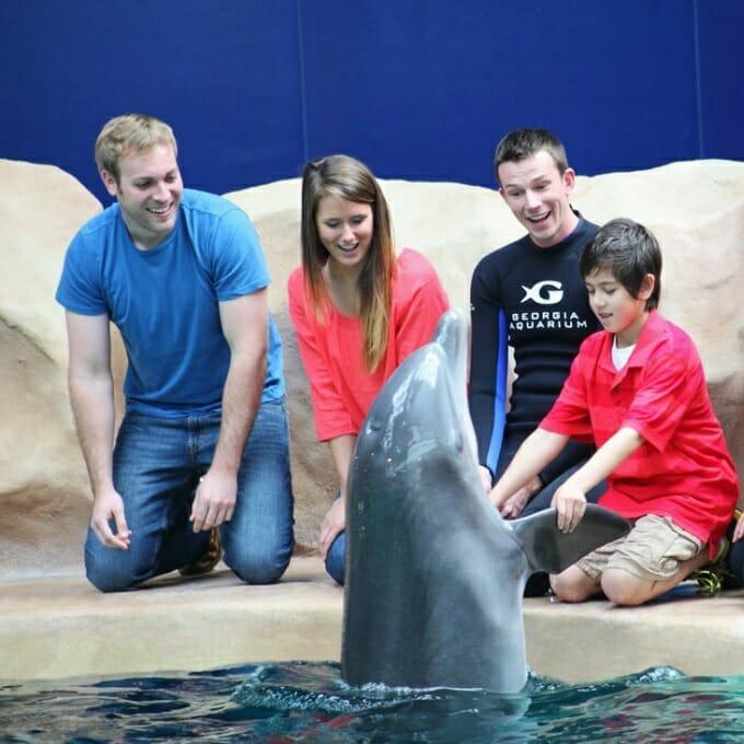 2020 Dolphin Encounter