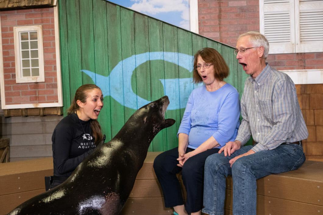 Sea Lion Encounter 5