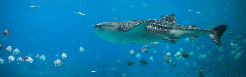 Whale Shark IPA 2
