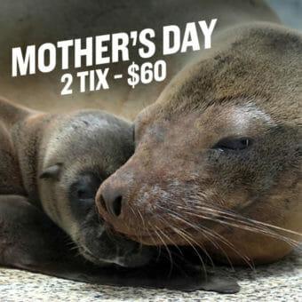 Mother's Day at Georgia Aquarium 1